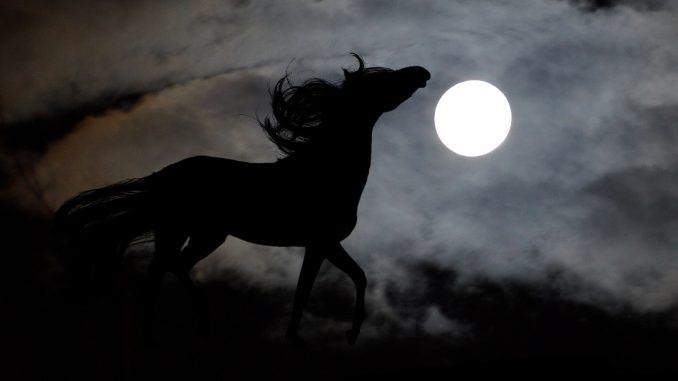 promenade équestre nuit soir